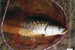 fish by koba