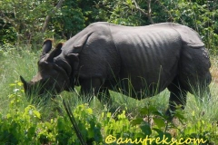 rhino in BNP 2014 June